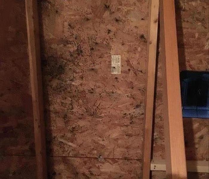 Attic Filled with Mold!